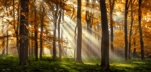 Rays Of Luck by jkrab