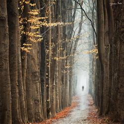 A Distant Stranger by jkrab