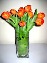 Tulip Arrangement by songhee