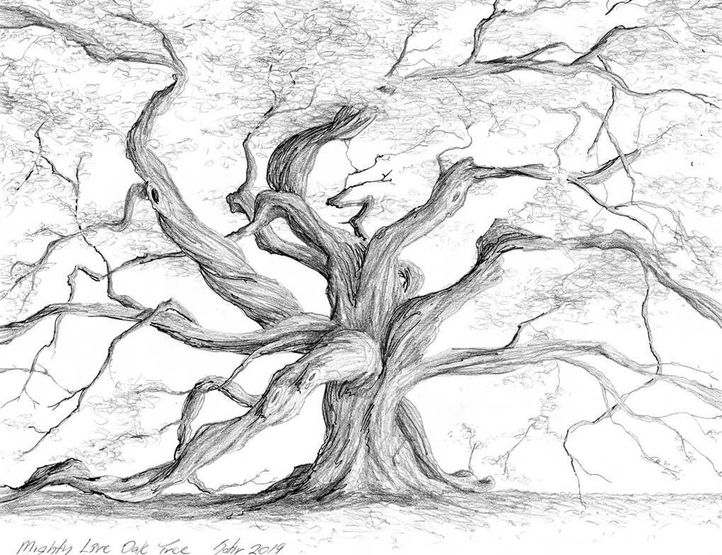 The Mighty Live Oak by Harley-1979