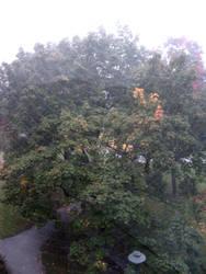 Web on my window by fairyfrog