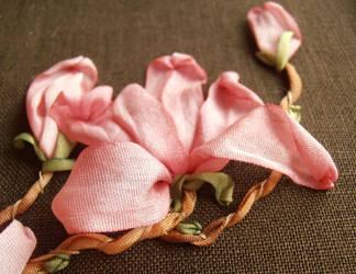 Silk Soulangeana closeup by fairyfrog