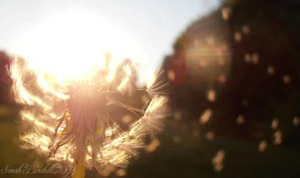 Dandelion seeds on the wind by fairyfrog