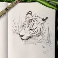 Inktober 12: Siberian Tiger by Alithographica