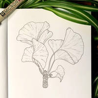 Inktober 16: Ginkgo by Alithographica