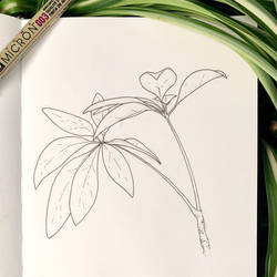 Inktober 19: Dwarf Umbrella Plant by Alithographica