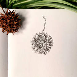 Inktober 20: Sweetgum by Alithographica