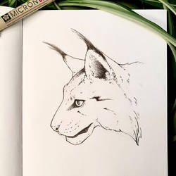 Inktober 24: Lynx by Alithographica