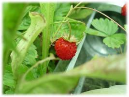 Strawberry by Daelnz
