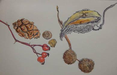 January 2015 seeds  pods by joyandsoul