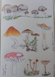 Mushroom Miscellany by joyandsoul