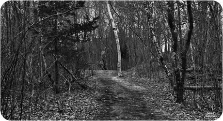 The Birch by XxAcGXx