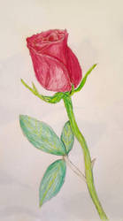 Rose by Asmathues