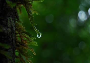 After The Rain by x-Adrasteia-x