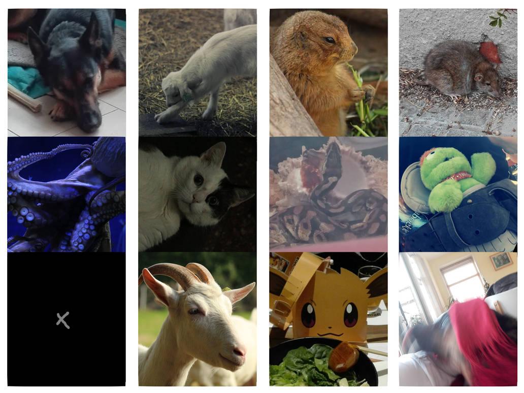 Animal Summary by Acethirn