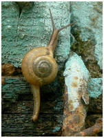 Snail sprint. by chinlop