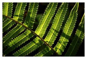 fern by chinlop