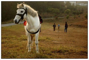 white horse by chinlop