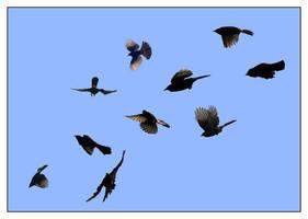 flight of fantasy by chinlop