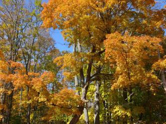 Fall Beauty by Graphitation