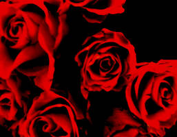 Red Rose by y2jabba
