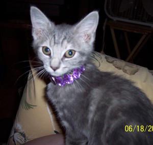 snigglefritz98's Profile Picture