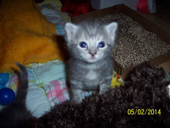 Blue eyed baby by snigglefritz98