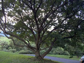 Tree by snigglefritz98