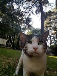 Finn The Cat by katakana-21