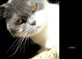 My Cat by snowmask