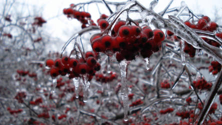 Berries on Ice by neoMWH