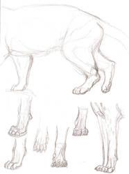 Paws by akeli