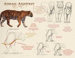 Animal Anatomy - Cats Part 1 by akeli
