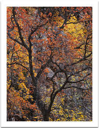 Autumn's Grace by GuyTal