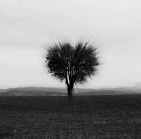 heartree by enkin
