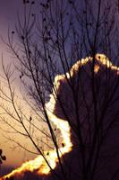 looking up by enkin