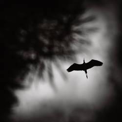 The flight by kpavlis