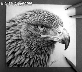 Aquila by nightfuryscars