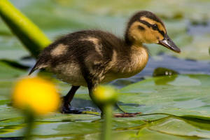 Another Little Explorer by NicoFroehberg