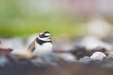 The Voice of Varanger by NicoFroehberg