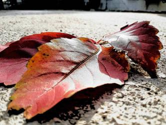 Autumn 2. by OrsatUrsusActos