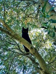 Black Panther Gato :) by OrsatUrsusActos