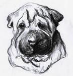 Shar Pei Sketch by kique-ass