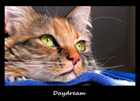 Daydream by 1000--Words