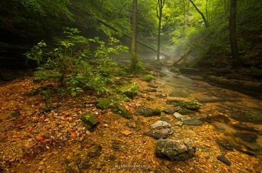 Misty forest II by marcus-lizard