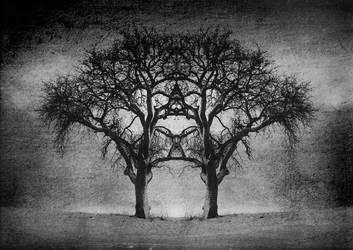Self Reflection 1 by KatieMaddison