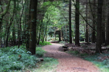 Woodland Path by XLittleDoveX