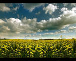 Grendon Fields by yatesmon