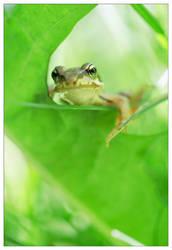 Little frog by devknu