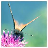Nectar by devknu